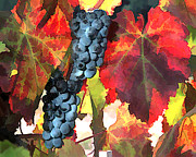 Sparkling Wine Prints - Harvest Time Grapes and Leaves Print by Elaine Plesser