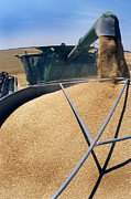 Combine Photos - Harvesting Grain by Jeremy Walker