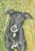 Frances Evans - Harvey the Greyhound