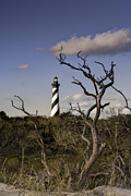 Sea Grass Posters - Hatteras Lighhouse - NC Lighthouse Scene Poster by Rob Travis