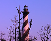 Cape Hatteras Lighthouse Posters - Hatteras Light and Tree Poster by Al Powell Photography USA