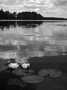Haukkajrvi Framed Prints - Haukkajarvi Water lilies in bw Framed Print by Jouko Lehto