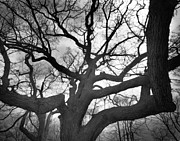 Movies Photo Originals - Haunted Tree by Phantasmagoria Photography