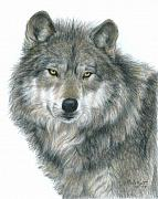 Wolves Drawings - Haunting Eyes by Carla Kurt