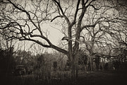 Kelly Photo Prints - Haunting Print by Kelly Reber