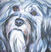 Havanese Framed Prints - Havanese Framed Print by Lee Ann Shepard