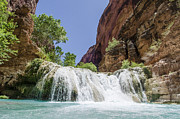 Tribe Photos - Havasu Falls by Steve Williams