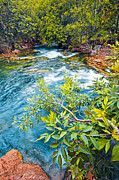 Waterfall Photos - Havasu river flora by George Messaritakis