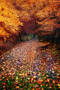 Autumn Woods Posters - Have a little Faith Poster by Photodream Art