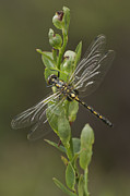 Dragonfly Macro Photos - Having a Break by Andy Astbury