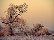 Winter Photos Prints - Haw frost Print by Linsey Williams