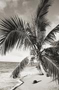 Location Art Photo Prints - Hawaii Ocean Palm Print by Ed Robinson - Printscapes