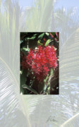 Ginger Flower Digital Art Posters - Hawaii Red Ginger Poster by Charlie Osborn