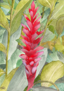Botanical Painting Originals - Hawaiian Beauty by Ken Powers