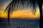 Frond Posters - Hawaiian Palm Sunset Poster by Kelly Wade