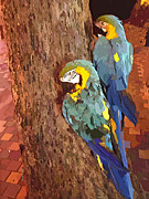Hawaiian Parrots Print by Cheryl Young