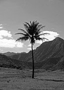 Wild Life Photos - Hawaiian Valley Palm by David Paul Murray