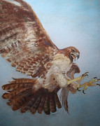Hawk Pastels Framed Prints - Hawk Framed Print by Flo Hayes