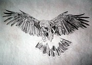 Claw Drawings - Hawk by Robert Lance