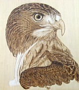 Roger Storey Fine Arts Pyrography - Hawk Watch by Roger Storey