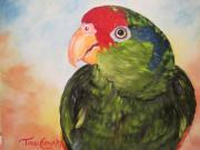 Amazon Parrot Paintings - Hawthorne by Terri Clements