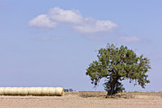 Bales Photo Metal Prints - Hay Bales and a Tree Metal Print by Jeremy Woodhouse
