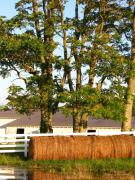 Tennessee Barn Prints - Hay Bales and Trees Print by Todd A Blanchard