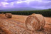 Corn Stalks Posters - Hay Bales At Sunrise Poster by HD Connelly