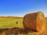 Haybales Painting Metal Prints - Hay Bales Metal Print by Dominic Piperata