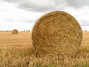 Bale Metal Prints - Hay Bales Metal Print by Edward Fielding