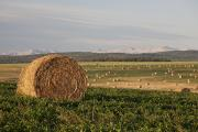 Bales Posters - Hay Bales In A Field With Mountains In Poster by Michael Interisano