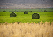 Bound Acrylic Prints - Hay Bales in Field Acrylic Print by David Buffington