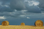 Sami Sarkis Prints - Hay bales in harvested corn field Print by Sami Sarkis