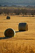 Bales Framed Prints - Hay bales Framed Print by Jill Reger