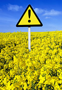 Rapeseed Photos - Hay Fever, Conceptual Image by Mark Sykes