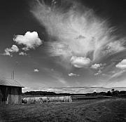 Stephen Mack Metal Prints - Hay Field on Clarks Lake Road Metal Print by Stephen Mack