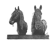 Chevaux Framed Prints - Hay How u doin  Framed Print by Marianne NANA Betts