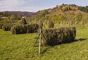 Romania Photos - Hay Racks And Stooks, Romania by Bob Gibbons