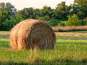 Haybale Print by Louise Peardon
