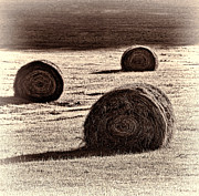 Round Haybale Framed Prints - Haybales in the Field Framed Print by Don Schwartz