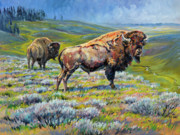 Yellowstone Paintings - Hayden Valley Bulls by Steve Spencer
