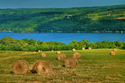 Finger Lakes Framed Prints - Hayfield And Lake IV Framed Print by Steven Ainsworth