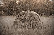 Hay Photos - Hayfield by Shawn Wood