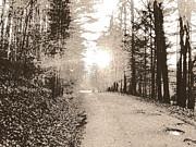 Amy Sorrell - Hazed Path