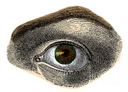 Sight See Prints - Hazel Eye Print by Science Source