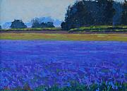 Flower Field Paintings - Hazy Days by Alfred Currier