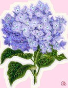 Mary M Collins - Hazy Hydrangea