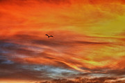 Grey Clouds Digital Art Framed Prints - hd 413- Sunset Series Lone Seagull Framed Print by Chris Berry