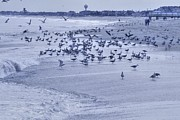 Hdr Photo Prints - HDR Seagulls at Play in the Sand Print by Pictures HDR