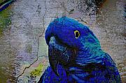 Macaws Posters - He Just Cracks Me Up Poster by Jan Amiss Photography
